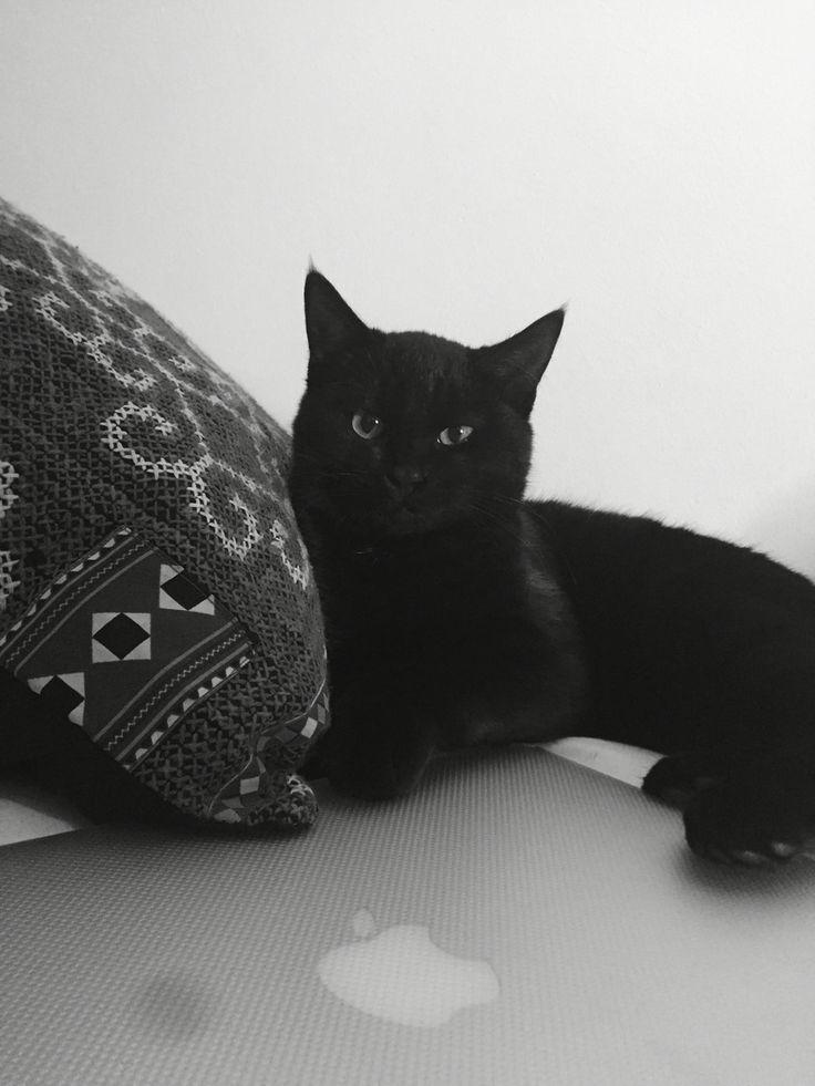 #apple #mac #blackcat #catlife #catlady #esthetics