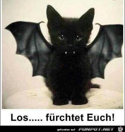 Hier bei uns von EBENBLATT gibt's die coolsten und lustigsten Katzen Shirts für Katzenliebhaber, schau vorbei! #katzen #katze #cat #cats #herrchen #katzenliebhaber #katzenshirts – Cailli George