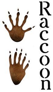 Stencil Details for Raccoon Paw Prints - a648l