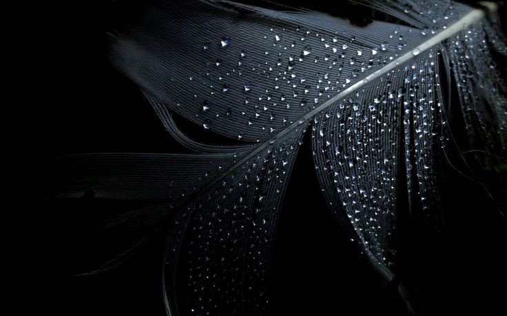 Black Dark Leaf Wallpaper - http://www.0wallpapers.com/2879-black-dark-leaf-wallpaper.html