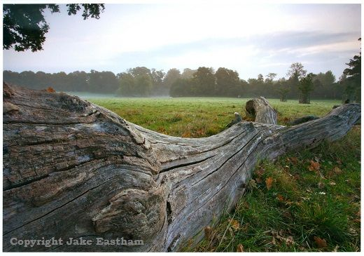A fallen tree trunk in Dinton Park by the photographer Jake Eastham who lives near Salisbury.