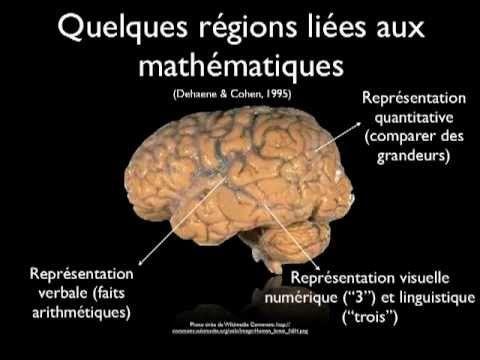 Cerveau: les découvertes de la neuropédagogie - France 2 - YouTube