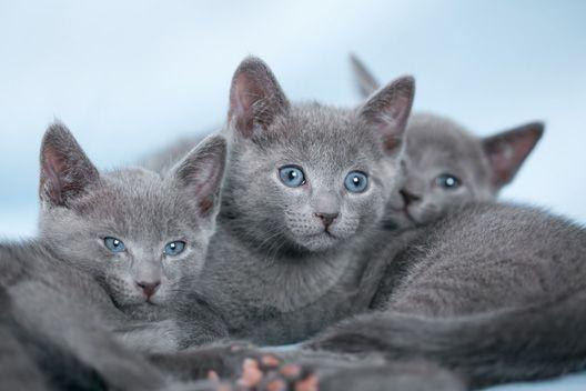 Transporter dla kota - jaki wybrać?