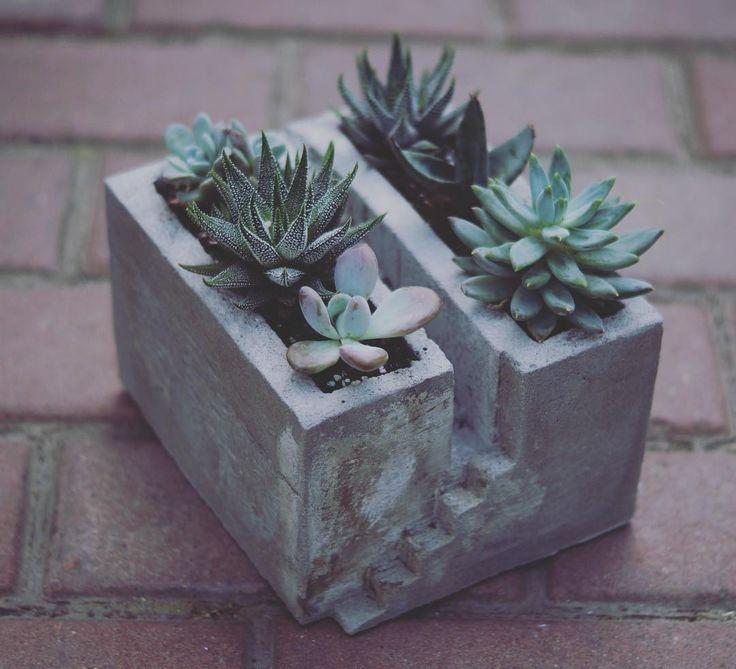 Маленькая лесенка к суккулентному саду. Бетон - это стильно и интересно.  Уход…