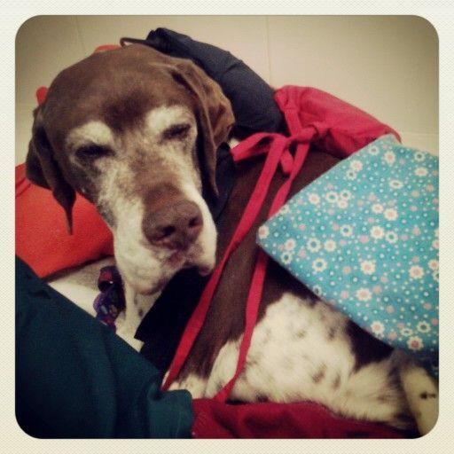 Choco en su primera terapia  Termoterapia y magneto