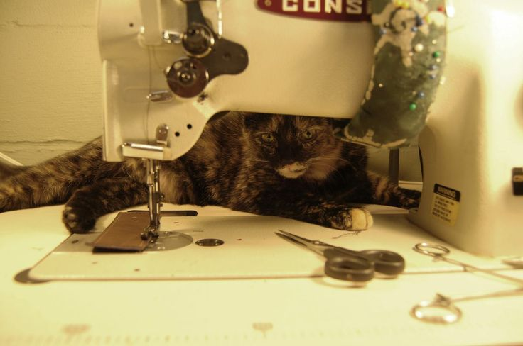 Beatrix, the cat, overseeing operations. Quality control by Beatrix.
