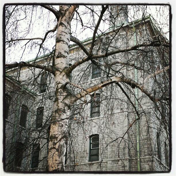 Best Abandoned Places Canada: 3260 Best Asylum Life!!!!! Images On Pinterest