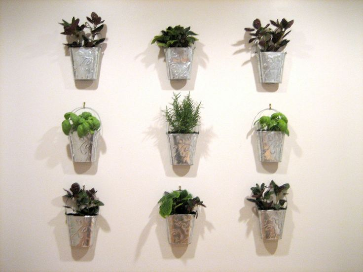 wall mounted indoor herb garden - Google Search