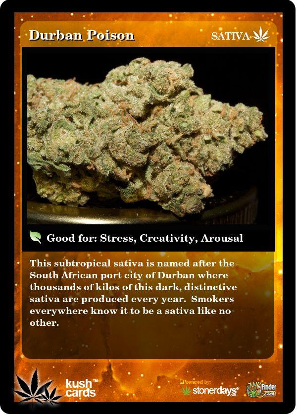 Durban Poison | Repined By 5280mosli.com | Organic Cannabis College | Top Shelf Marijuana | High Quality Shatter