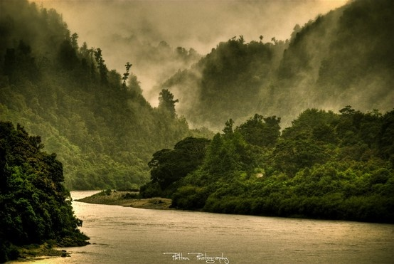 Foggy river and forest near Westport, west coast of South Island, New Zealand. Photo by Kristian Pletten