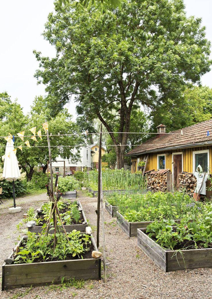Viljele kasvatuslaatikoissa. Farm your vegetables in containers. | Meillä kotona / Unelmien Talo&Koti Kuvaaja ja toimittaja: Camilla Hynynen