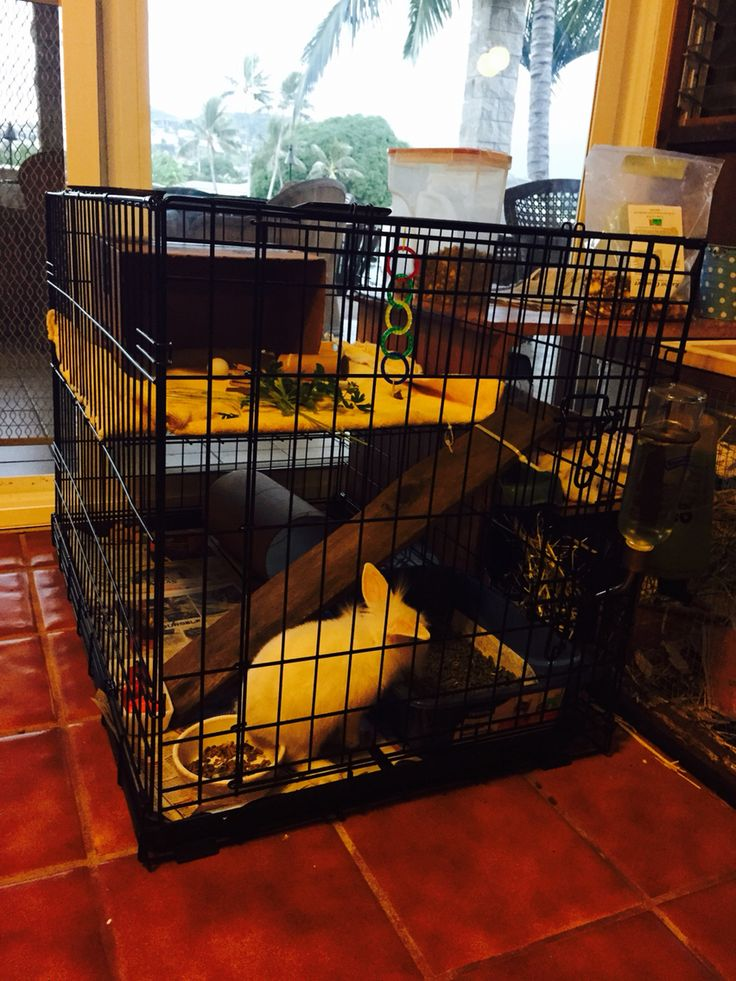 Bunny cage from dog crate with divider piece as second