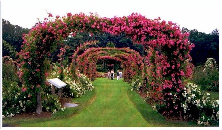 Hartford, CT  The world famous rose garden is the oldest municipally operated rose garden in the country.  It is a two and a half acre garden which has about 800 varieties of roses