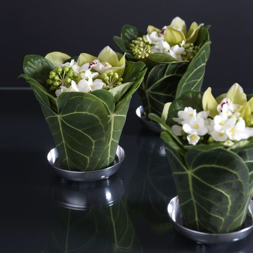 Large plant leaves wrapped around a pots filled with white violet blooms. What a wonderful idea! / Blomst af Hansen AS