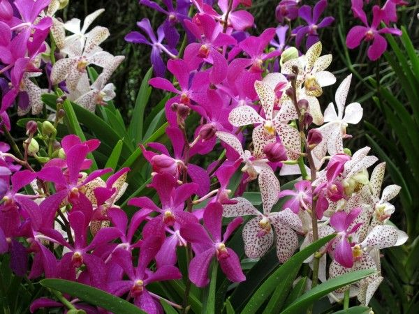 how to take care of orchids in singapore