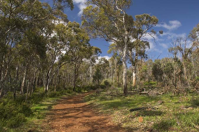 A Hike Around Whistlepipe Gully, Perth, Australia