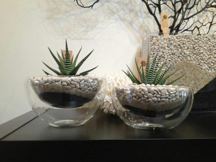 Zebra Haworthia In A Floating Dish Gardening Pinterest
