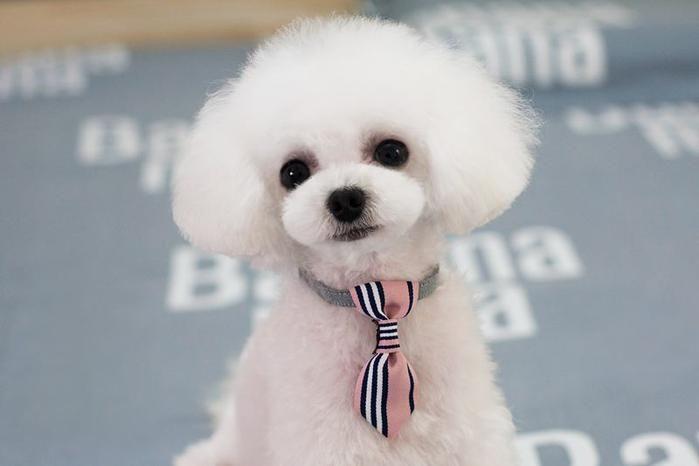 Pet Accessories Dog Tie Collar Teddy Bow Dog Cat Tie British Short Triangle Scarf Small Dog Collar Dog Accessories Dog Tie