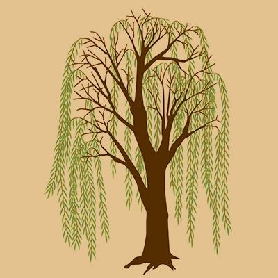 75 Best Willow Tree Images On Pinterest Weeping Willow Tattoo