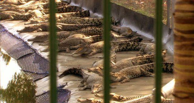 """""""Black Water"""" (2007) #Crocodile"""