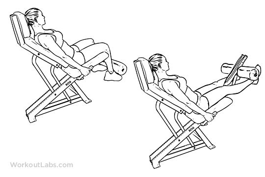 seated machine leg extensions