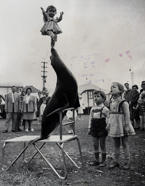 Balancing Act, 1962. Source: Photographic Morgue of the New York Journal-American, Harry Ransom Center: A seal puts on a show by balancing a doll before young viewers at a performance of the Krone Circus in Aachen, Germany.