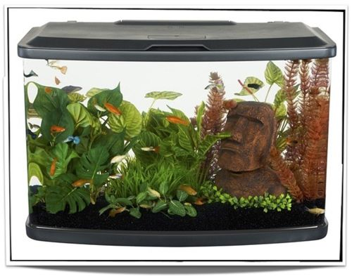 Aquariums For Sale at Pet Fish For Sale - 16 gallon only $129.95 at www.petfishforsale.com
