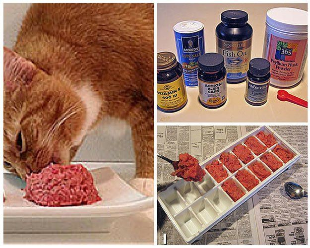 Easy Raw Cat Food | Homemade Cat Food Recipes | The Best Healthy and Inexpensive DIY Food For Your Pet  http://pioneersettler.com/homemade-cat-food-recipes/