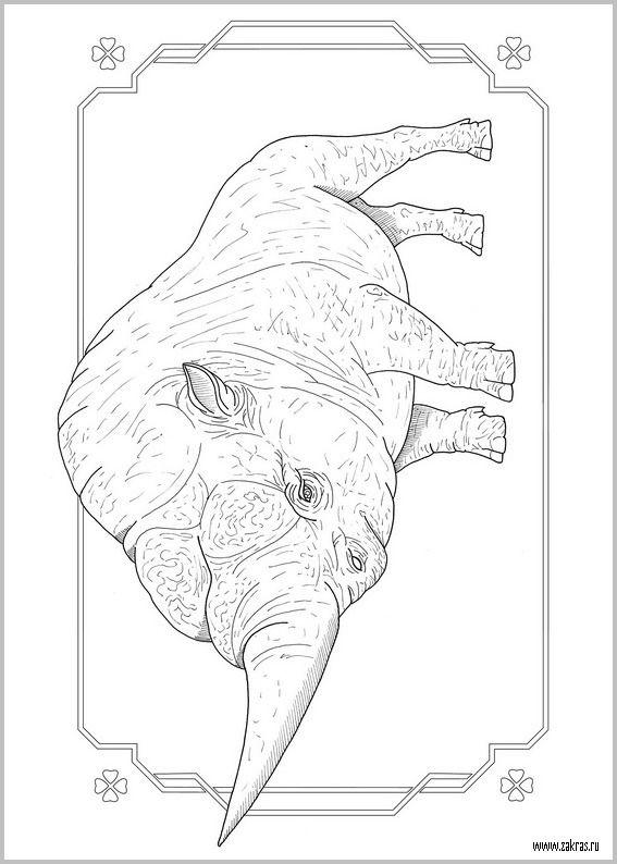 14 best coloriage les animaux fantastiques images on - Dessin animaux fantastiques ...