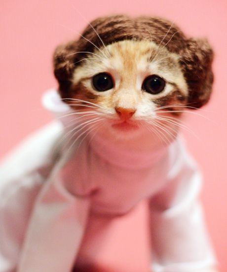 Kittens beg to be adopted dressed in costumes — CANNOT HANDLE.
