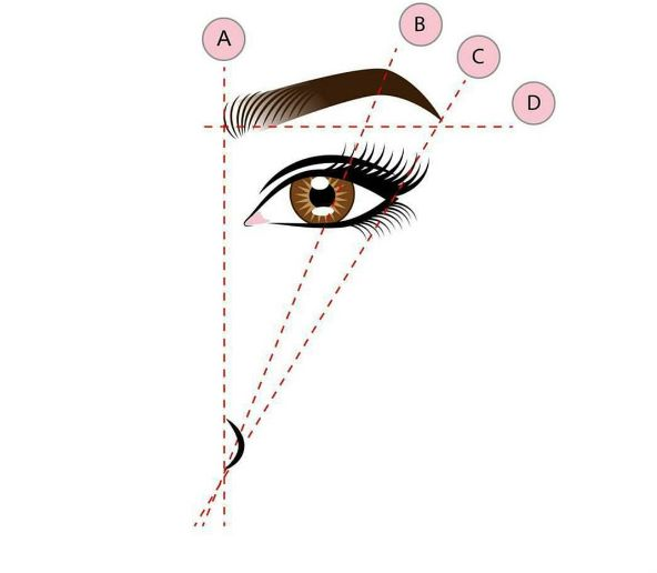 As a general guide, the head (A) of your eyebrow should line up with the outer edge of your nostril and the tail (C) should line up diagonally with that nostril.