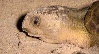 """""""O GRITO DO BICHO"""": Globo Natureza: tartarugas marinhas"""