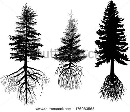 Pine Tree Silhouette Roots Stock Photos, Images, & Pictures | Shutterstock