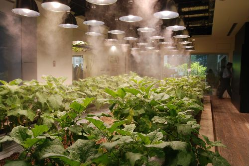 """Imagine stepping out of your high-rise apartment into a sunny, plant-lined corridor, biting into an apple grown in the orchard on the fourth floor as you bid """"good morning"""" to the farmer off to milk his cows on the fifth."""