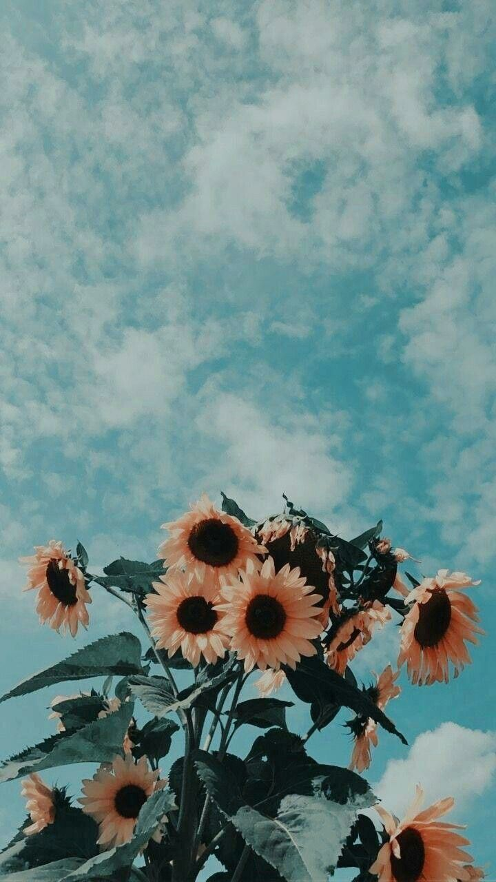 Flower Aesthetic Sky Flowers Nature Vintage Photography Https Weheartit Com Entry 3 Sunflower Wallpaper Painting Wallpaper Aesthetic Iphone Wallpaper
