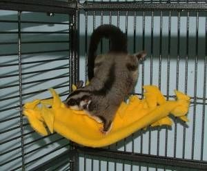 "Great website that has step-by-step instructions for tons of ""no-sew"" accessories for sugar glider owners! Got fleece ready for the first project for my little Chip."