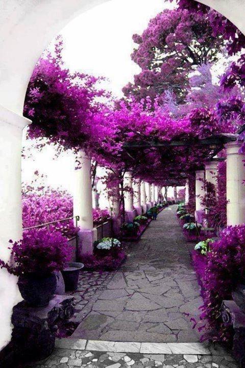 Anacapri- Capri- Italy