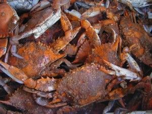 I Love You...A Bushel (of crabs) and a peck....A Marylander's rendition of