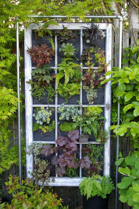 vertical garden with old window