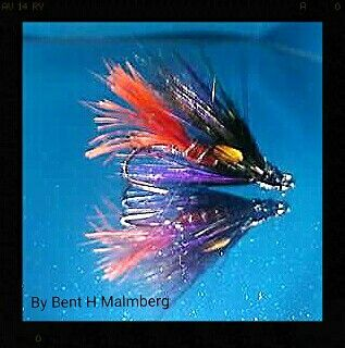 Salomon flies