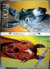Необычайные рассказы из жизни животных.  Лошади. Ослы.