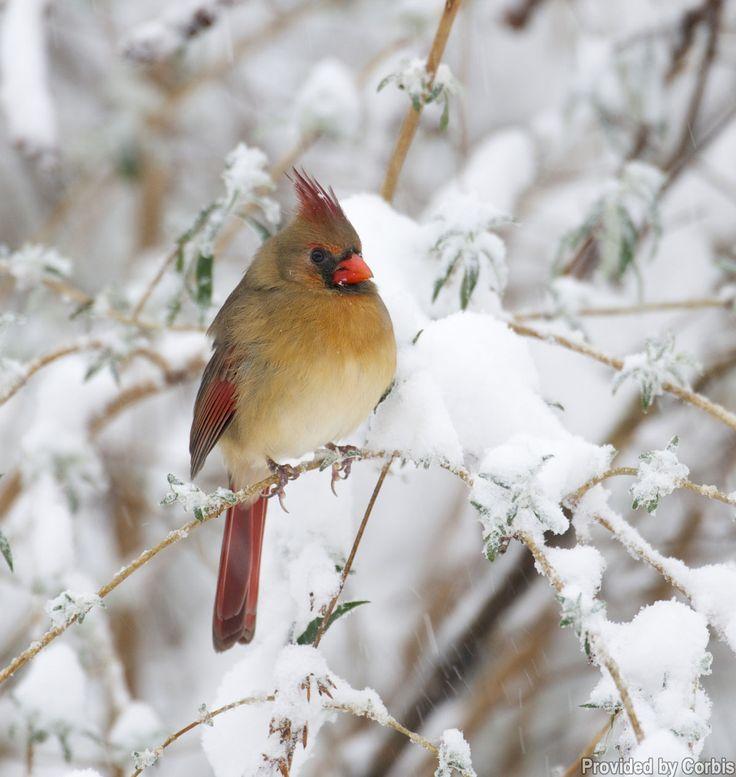 beautiful bird winter ndash - photo #46