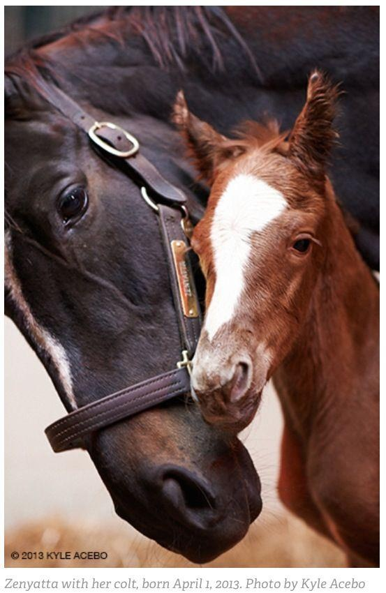 Equipped Equine Liked · April 2 Another Pic of Queen Z and ...