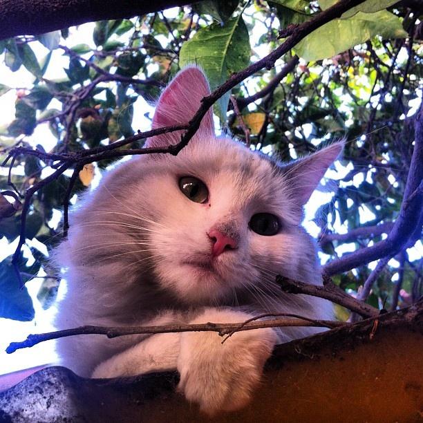 #gata #cat #animal #mirada #tierna
