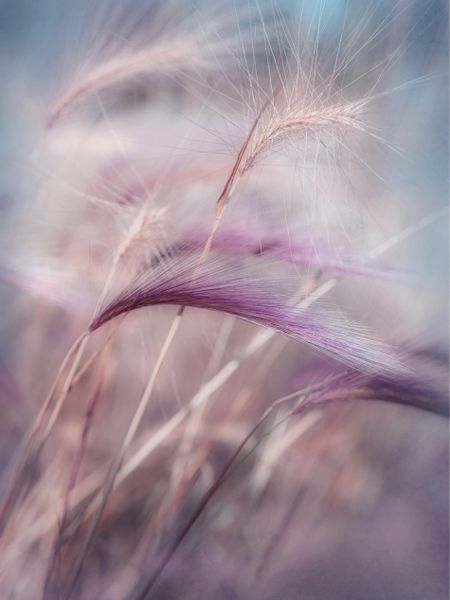 Lovely mood!  Whispers in the wind by Priska Wettstein
