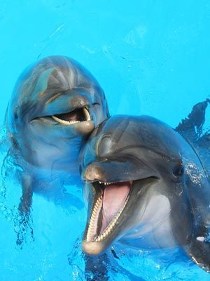 Eu gostaria de poder nadar com esses golfinhos. # Animais # Viagem em família #Férias em família   – Meerestiere