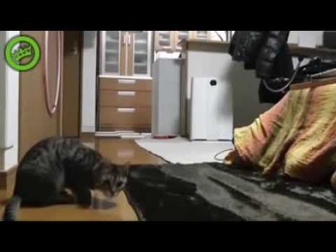 "Funny Cat Compilation 2013, The Best Funny Animal Video on the internet Wins & Fails - http://positivelifemagazine.com/funny-cat-compilation-2013-the-best-funny-animal-video-on-the-internet-wins-fails/ http://img.youtube.com/vi/7iiPoNb2sXo/0.jpg  Judy Diet Programme ***Start your own website with USD3.9 per month*** Please follow and like us:  			var addthis_config =  				 url: """", 				 title: """""