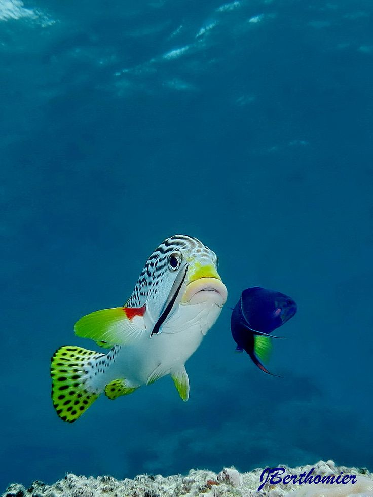 Best Underwater Images On Pinterest Tropical Fish African - Beautiful photography reveals underwater complexity aquariums