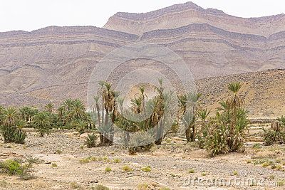 View of the oasis, big mountains  and deserts in Morocco
