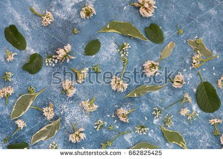 Floral background.The flowers of white clover and leaves on a blue vintage background.